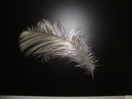 Sense Fine Art Gallery - Feathers